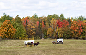horse-drawn covered wagon rides